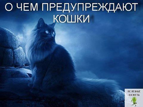 Кошки и удача